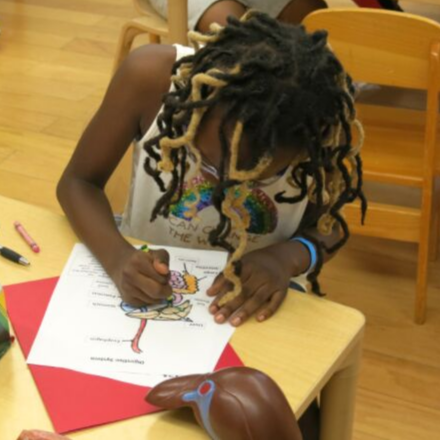 Girl coloring a diagram of the digestive system