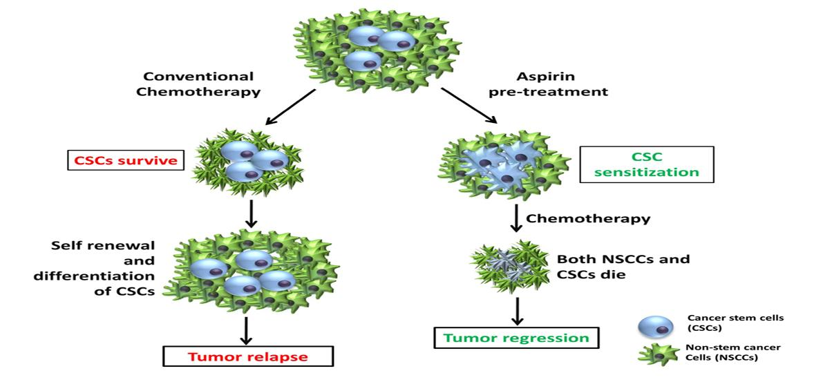 diagram of aspirin effect on breast cancer cells