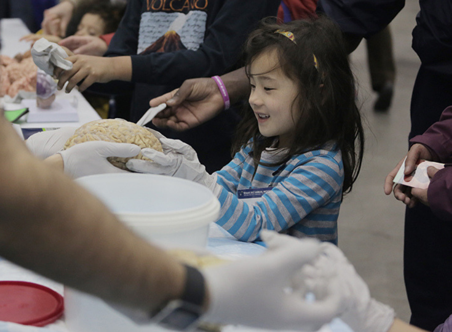 A young girl holds a human brain in her hands
