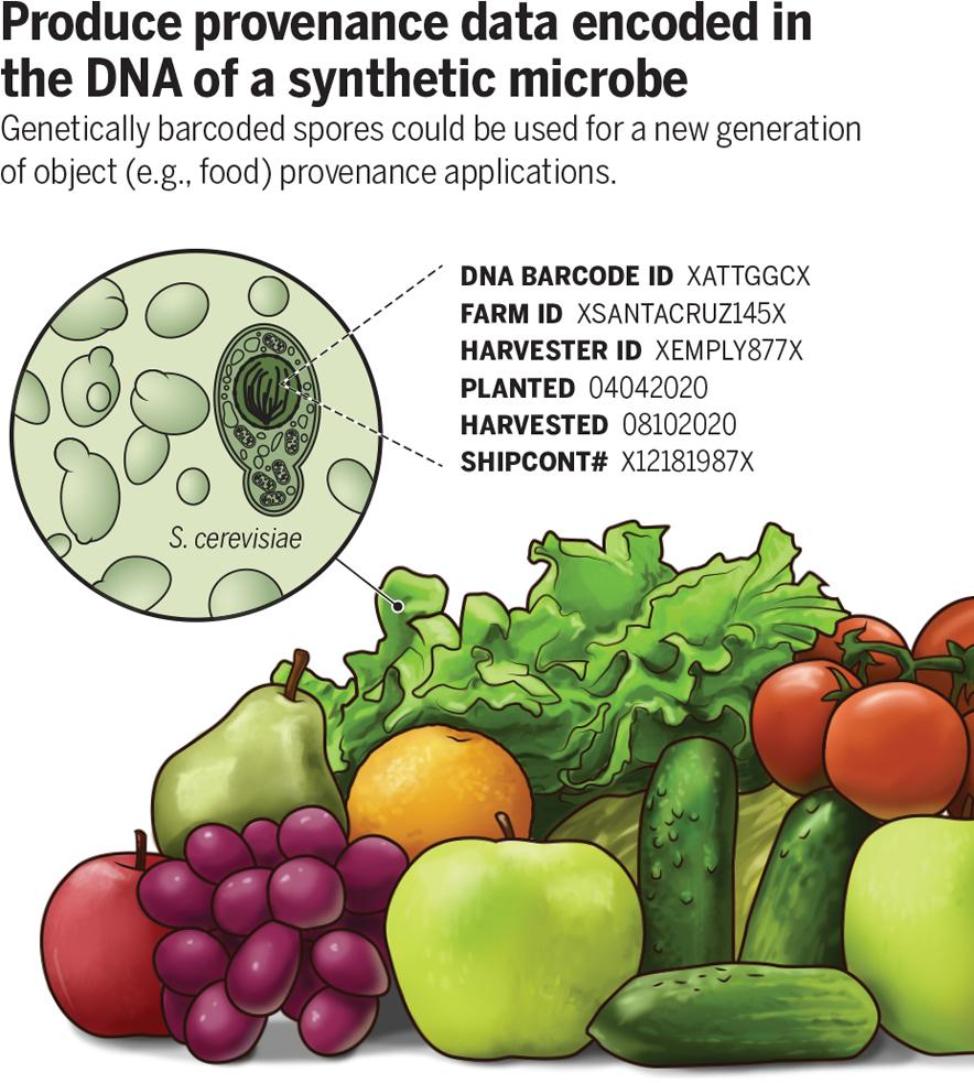 chart showing how produce can be barcoded using bacteria
