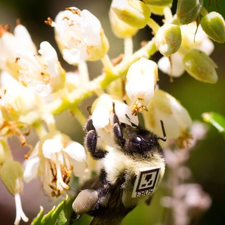 Bee with QR code