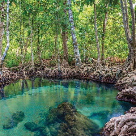 Mangrove forests are most effective carbon storage ecosystems
