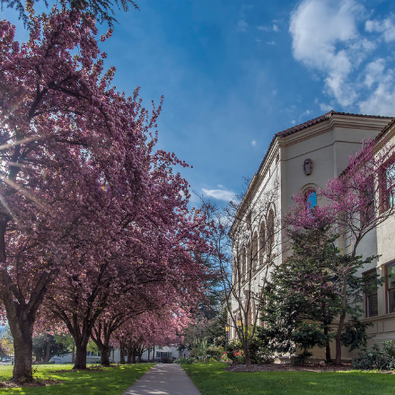 A flowering tree and a building on the campus of Southern Oregon University