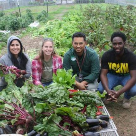 Alexis Racelis and students preparing donation from organic garden for UTRGV food pantry.